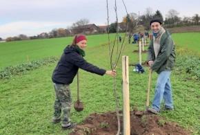 Výsadba historických odrůd stromů 16.11.2019